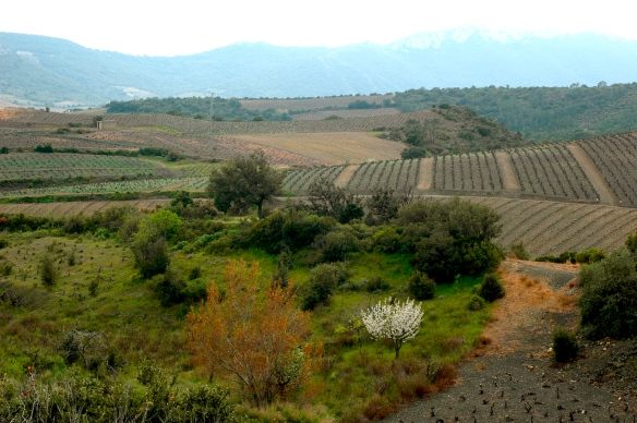 On the road around Cucugnan