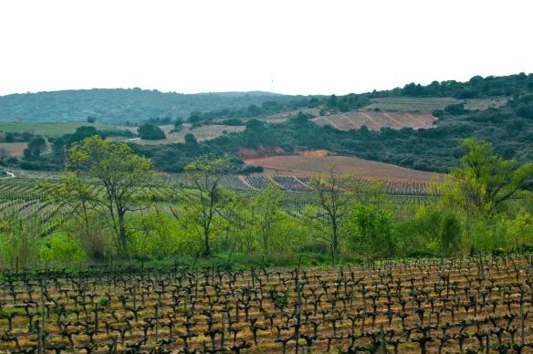 The vineyards around peyrepertuse chateau