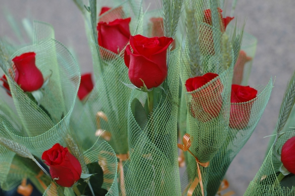 Red roses on Sant Jordi