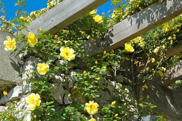 Roses in park cervantes