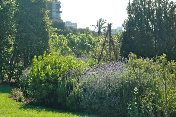 Lavender in park cervantes