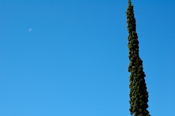 Cypress and the moon