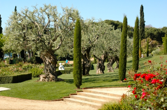 Olive trees in the park